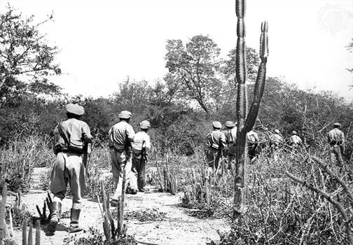 Avance de tropas bolivianas entre los cáctus y matorrales del Chaco.
